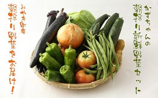 かずちゃんの朝採り新鮮野菜セット【みやき町産朝採り野菜】