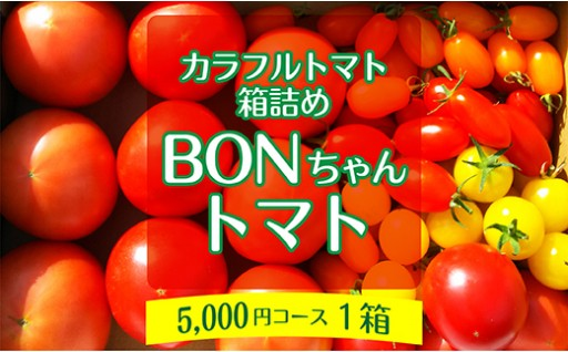 BONちゃんトマト箱詰め【1箱】