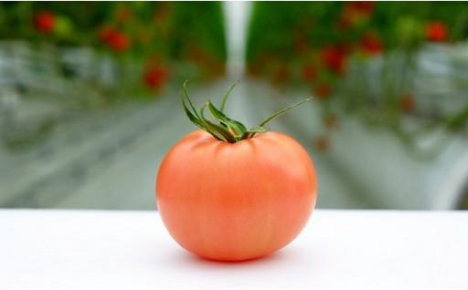 Fbg-03 毎日の笑顔をつくる! 四万十育ちの万能トマト