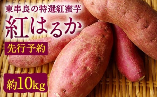 東串良の特選紅蜜芋紅はるか 約10kg(先行予約)