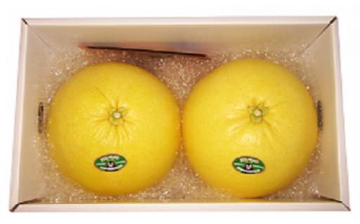 今季受付開始しました★世界最大!の柑橘晩白柚(ばんぺいゆ)