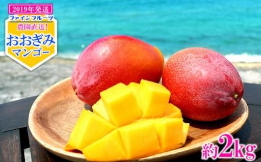 【2019年発送】ファインフルーツおおぎみマンゴー 約2kg
