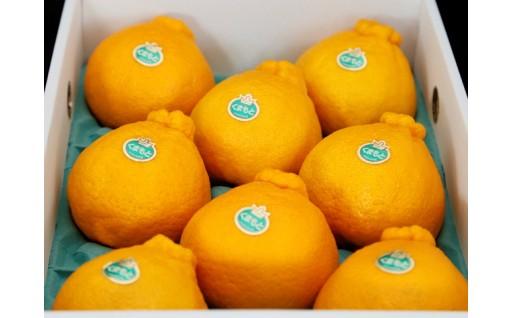 【先行受付開始!】柑橘の王様「デコポン」3㎏