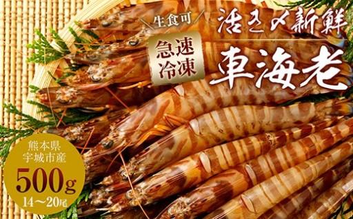 熊本県産 急速冷凍 車海老500g(14~20尾) 生食可
