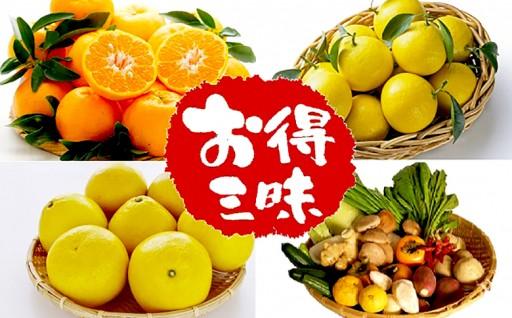 南国高知の柑橘三昧【ポンカン・文旦・小夏】野菜セット付き