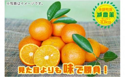 【減農薬】本部町産タンカン(約10kg入)【2019年発送】