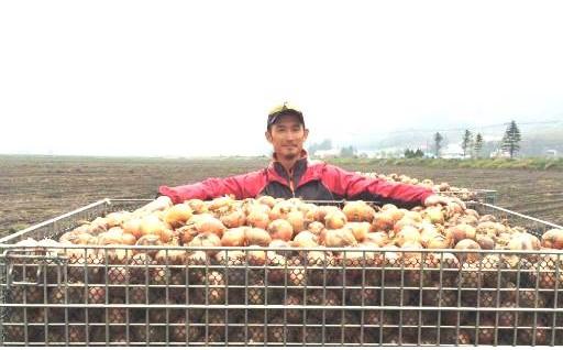 収穫したての新玉葱をご家庭にお届け!