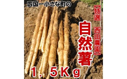 【四国一小さな町】田野町から「自然薯」をお届けします!!