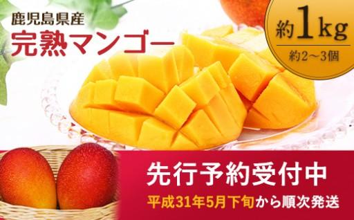 鹿児島県産 南国の恵み 完熟 マンゴー 1kg
