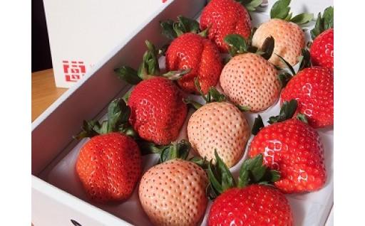 村田さん家のいちご【3種食べ比べセット】1箱(12~15粒)