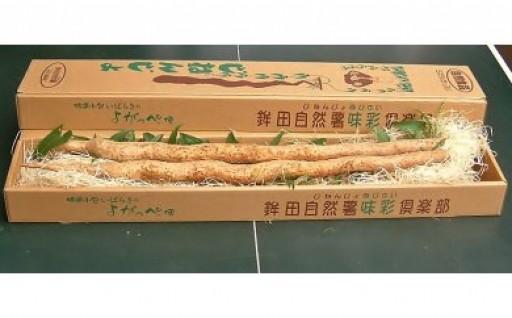 No.68 味彩倶楽部の自然薯 どーんと1.5kg!