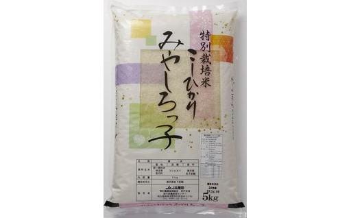 【新米】特別栽培米こしひかり「みやしろっ子」10kg