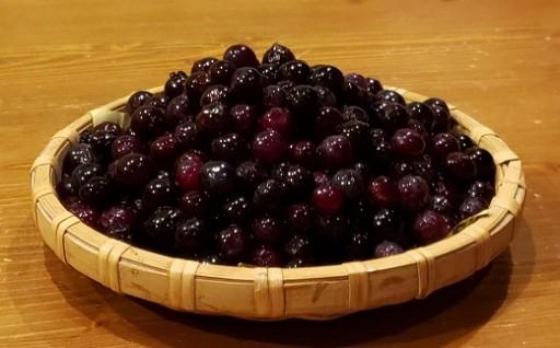 津野町産 ブルーベリー(冷凍)