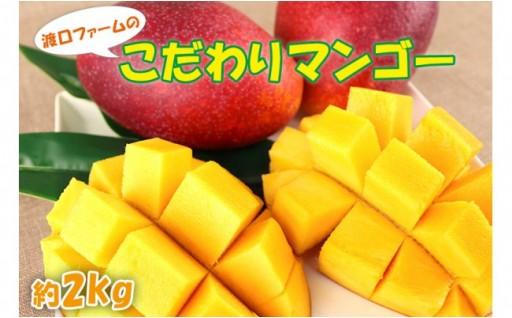 【2019年発送】渡口ファームのこだわりマンゴー約2kg
