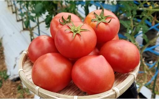 大人気!はちべえ塩トマト(ロイヤルセレブ)★糖度10度以上!