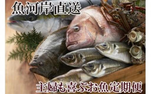 女将社長厳選!!お魚定期便2019 登場♪