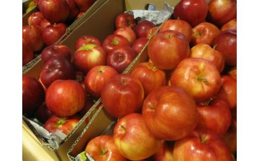 12月発送のりんごの申込みを12月2日まで再開・延長します!