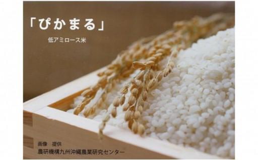 無農薬 低アミロース米「ぴかまる」<5kg>