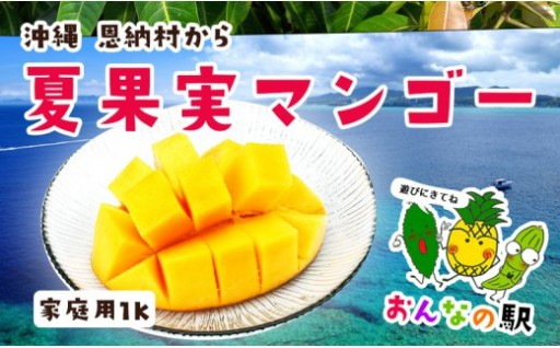 【2019年発送】完熟マンゴー1kg入り家庭用(恩納村産)