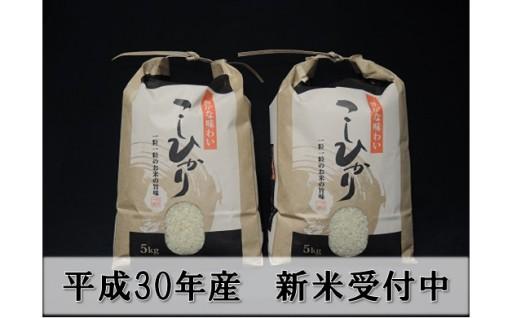 大沼ファームの庄内三川産コシヒカリ10kg