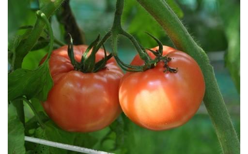 千葉県産トマト 4kg×2