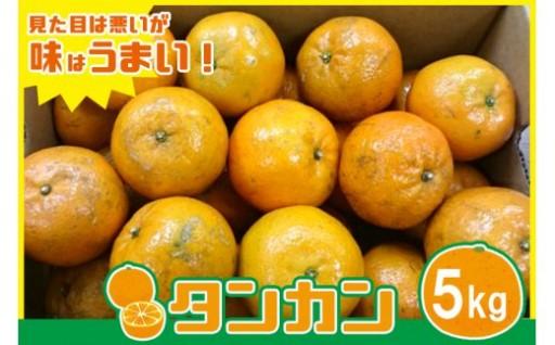 <国頭村特産>おいしい「タンカン」5kg