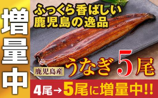 【期間限定☆増量中】鹿児島産の特上うなぎの蒲焼×5尾!
