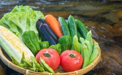 【定期便】旬のお野菜詰め合わせセット