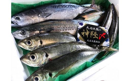 須崎の九石大敷の漁師が送る おさかな定期便!年10回分