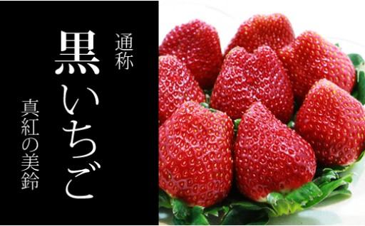 新種のイチゴ祭り!佐賀県小城市