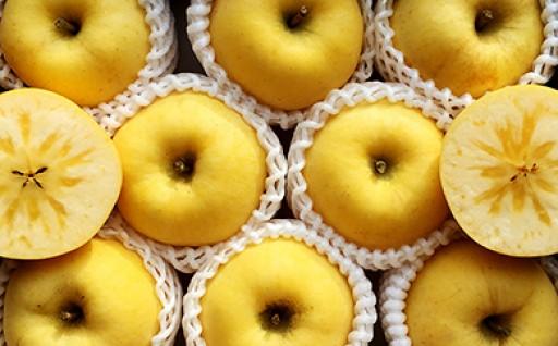 【雹害果へご支援ください】朝日町産りんご「はるか」5kg