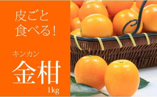 皮ごと食べて!完熟キンカン(1kg)