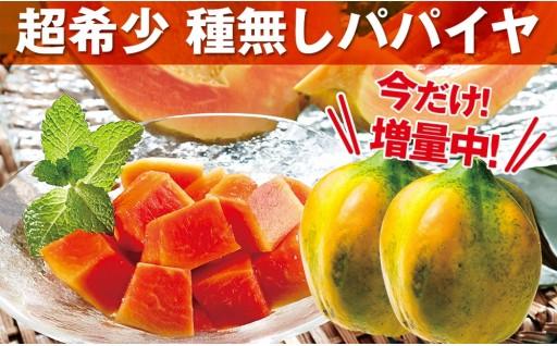 ★増量中! 国産フルーツパパイヤ 4.5Kg(6~8玉)