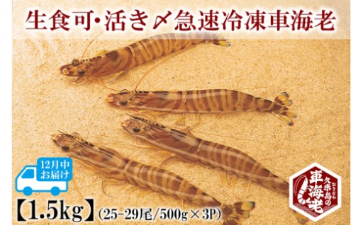 生食可・活き〆急速冷凍車海老 1.5kg(500g×3P)