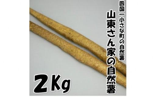 【四国一小さな町の自然薯】山東さん家の自然薯2.0kg