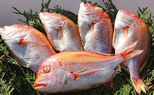 【連子鯛のアクアパッツァ用干物】12~1月・50セット限定!
