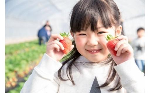 福岡が誇るおいしいイチゴ「あまおう」