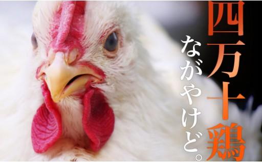 【間もなく受付終了!】四万十鶏 年間定期便セット