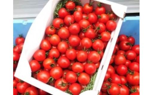 上野さん家のフルティカトマト