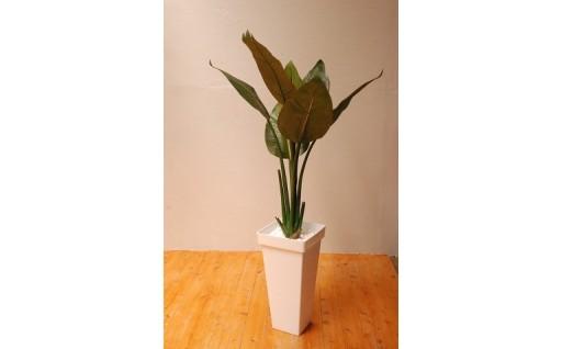 【ストレチア】本物そっくりの観葉植物です!