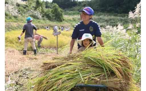 2019年も新潟県十日町市のお米を食卓でお楽しみください。
