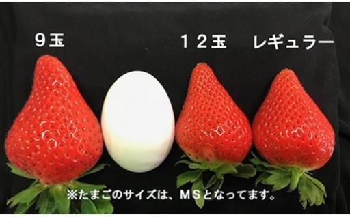 終了間近!希少な大玉イチゴ「おおきみ」を是非お試しください