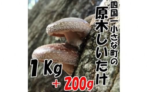 【四国一小さな町の原木椎茸】特選 冷凍 原木椎茸1.2Kg