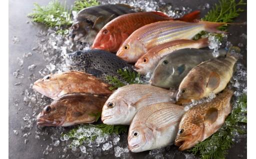 おいしい鮮魚をお届けします!【平戸地魚詰合せ】