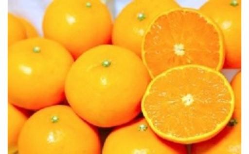 とろけるような食感!柑橘の大トロとも呼ばれる「せとか」受付中