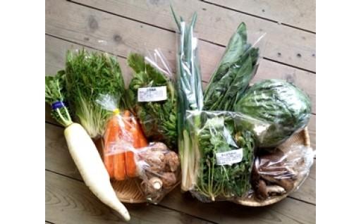 新城産の野菜詰め合わせセット