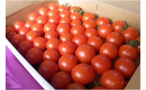 甘味と旨みが自慢!【高糖度】井下農園のフルーツトマト 約1㎏