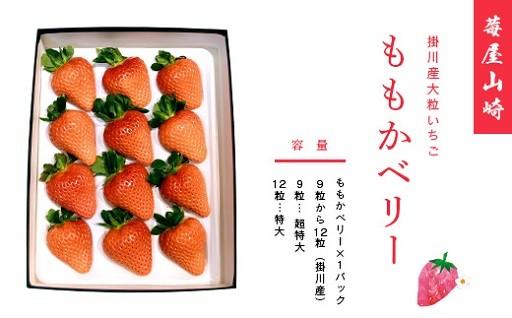莓屋山崎が作った大粒いちご掛川産「ももかベリー」