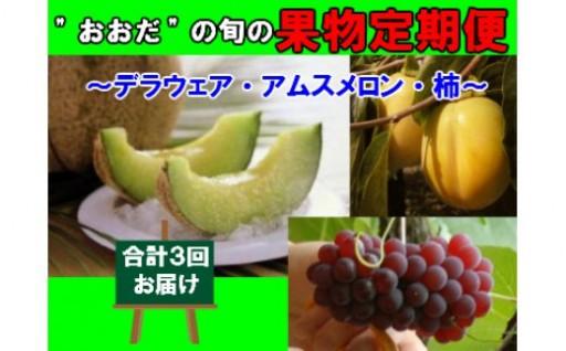 """""""おおだ""""の旬の果物定期便(デラウェア・アムスメロン・柿)"""