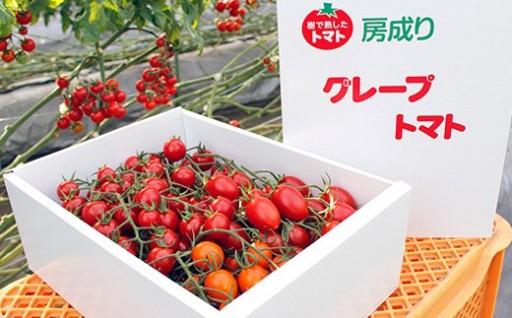 甘くて濃厚!房成りグレープトマト(ミニトマト)【化粧箱入り】